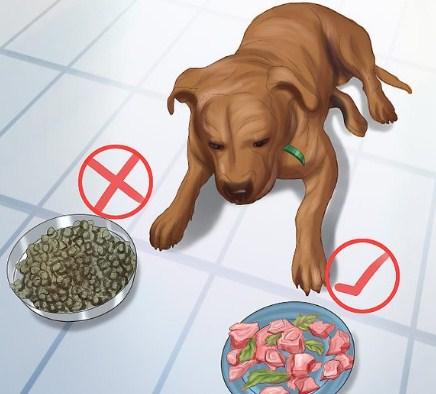 Pitbull Puppy Care