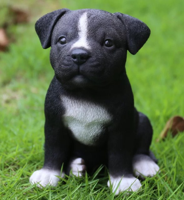 Pictures of Pitbull Puppies 2