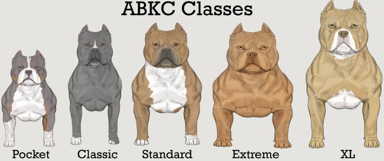 Pitbull Breeding Color Chart 4