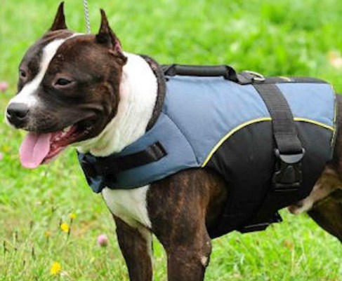 Leather Harness for Pitbulls