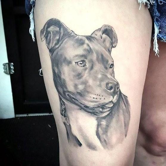 Pitbull Tattoos Designs 1