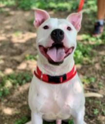 Ben Dogs to Adopt