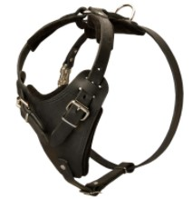 Best Leather Harness for Pitbulls
