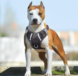 BABYLTRL Big Dog Harness