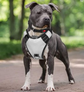 Best No Pull Dog Harness for Pitbulls