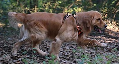 EXPAWLORER Big Dog No Pull Harness Soft Reflective Vest