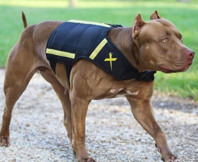 Weighted Vest pitbull muscle
