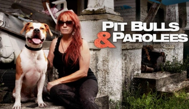 How Many Seasons of Pitbulls and Parolees Are There