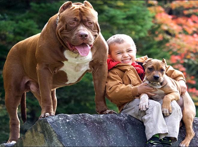 Pit Bulls Make Great Family Pets