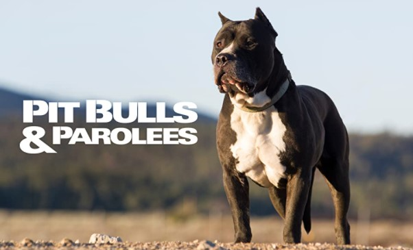 What Year is Season 8 of Pitbulls and Parolees