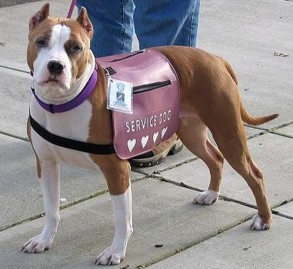 What Percentage of Service Dogs Are Pit Bulls