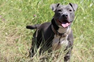 adoptable dogs in Villalobos Rescue Center anya