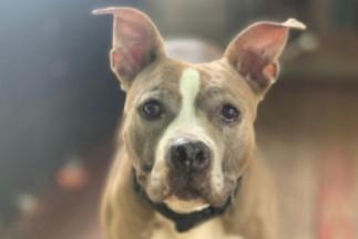 adoptable dogs in Villalobos Rescue Center appolonia