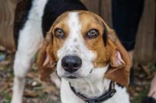 adoptable dogs in Villalobos Rescue Center atkins