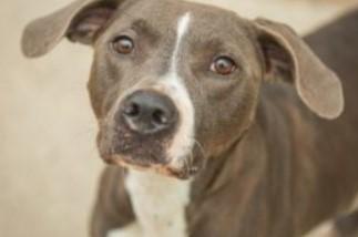 adoptable dogs in Villalobos Rescue Center barack obama