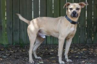 adoptable dogs in Villalobos Rescue Center barnum