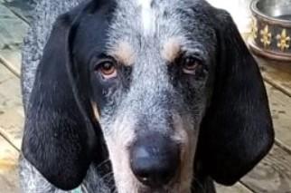 adoptable dogs in Villalobos Rescue Center baxter