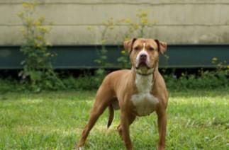 adoptable dogs in Villalobos Rescue Center beaubette