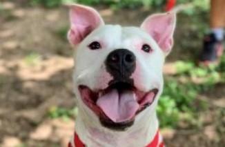 adoptable dogs in Villalobos Rescue Center ben