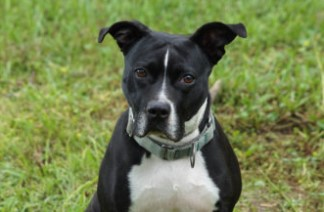 adoptable dogs in Villalobos Rescue Center bianca