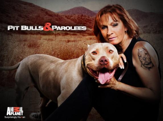Pitbull and Parolees Season 8 – Episodes Guide and Summaries